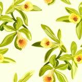 Vanilla flowers texture Stock Photo