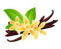 Vanilla flowers. Vector floral background Royalty Free Stock Image