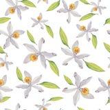 Vanilla flowers watercolor pattern. vector illustration