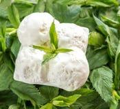 Vanilla ice cream in mint Stock Photo