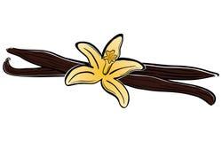 Vanilla image. A illustration of vanilla with flower Stock Photography