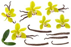 Vanilla isolated on white background set. Orchid yellow flower, stick or dry bean and green leaves group collection. Vanilla isolated on white background set royalty free stock photography