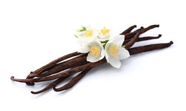 Vanilla with jasmine Royalty Free Stock Photography