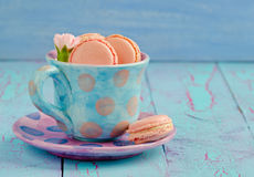 Vanilla macaroon in colorful cup Royalty Free Stock Photo