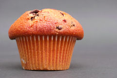 Vanilla muffin. On a nice grey background with copy space to the right - focus is on the front of the muffin top Royalty Free Stock Images