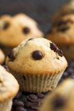 Vanilla muffins Royalty Free Stock Images
