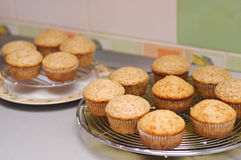 Vanilla muffins cooling Royalty Free Stock Images