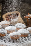 Vanilla muffins decorated with powder sugar Royalty Free Stock Image