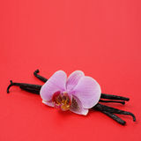 Vanilla and orchid flower Royalty Free Stock Photos