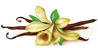 Vanilla orchid. Vanilla flower and dry pods on a white background Royalty Free Stock Photography