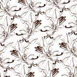 Vanilla Pattern background vector. Design element for cards decoration, textiles, paper. Natural drawings of vanilla with leaves, blooming flowers and leaves on stock illustration