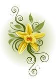 Vanilla Planifolia vector illustration