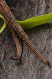 Vanilla Planifolia Vine and Dried Vanilla Pods Stock Image