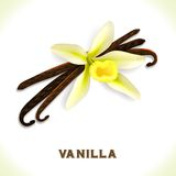 Vanilla pod isolated on white Royalty Free Stock Image