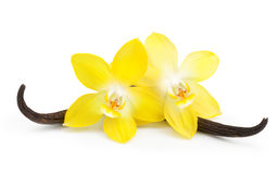 Vanilla pods and flower isolated Royalty Free Stock Photography
