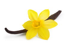Vanilla pods and flower isolated Stock Photography