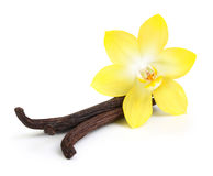 Vanilla pods and flower isolated Royalty Free Stock Images