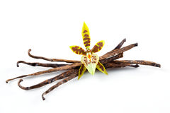 Vanilla Pods and Flower isolated on white Stock Photography