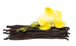 Vanilla pods and flower isolated Stock Photos