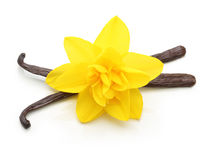 Vanilla pods and flower isolated Stock Photo