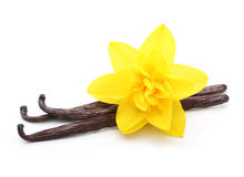 Vanilla pods and flower isolated Stock Images