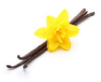 Vanilla pods and flower isolated Royalty Free Stock Image