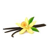 Vanilla pods with flower on white background Stock Photo