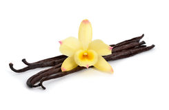 Vanilla pods with one yellow orchid. Stock Images
