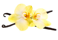 Vanilla pods and orchid flower. Isolated on white background Stock Photos