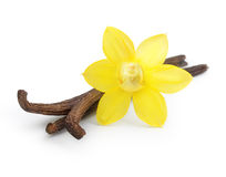 Vanilla pods and orchid flower Royalty Free Stock Image