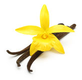 Vanilla pods and orchid flower Stock Photo