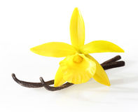 Vanilla pods and orchid flower Stock Images