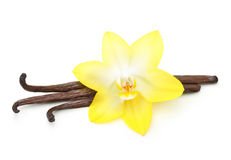 Vanilla pods and orchid flower isolated Stock Photography