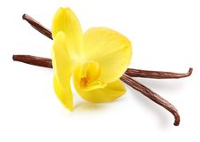 Vanilla pods and orchid flower Royalty Free Stock Images