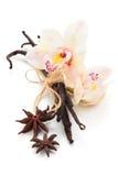 Vanilla pods. Royalty Free Stock Photos