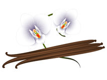 Vanilla pods and orchids  on white background. Stock Images