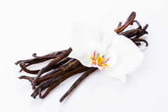 Vanilla pods Royalty Free Stock Photo