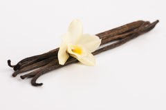 Vanilla pods. On white, close up Stock Photos