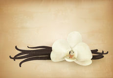 Vanilla retro background. Royalty Free Stock Photo
