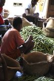 Vanilla selection from Madagascar Royalty Free Stock Photo
