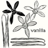 Vanilla set. Hand-drawn  illustration, can be used as a de Stock Image