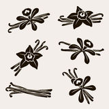 Vanilla set. Vector Royalty Free Stock Image