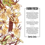 Vanilla spice poster with space for text. Trendy food spice or parfum industry component vector illustration. Vanilla flower sticks, leaves and extract oil Royalty Free Stock Image