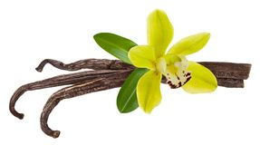 Vanilla stick isolated. Flower, pod and green vanilla Orchid leaf isolated on white background as aroma food ingredient. Close up royalty free stock image