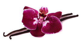 Vanilla stick with orchid flower. Stock Photo