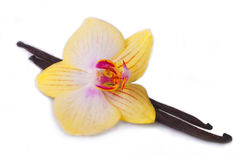 Vanilla stick with orchid flower. Royalty Free Stock Photography