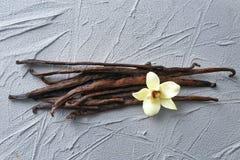 Vanilla sticks and flowe. R on grey background Stock Photos
