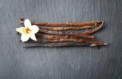 Vanilla sticks and flower on background. Vanilla sticks and flower on dark background Royalty Free Stock Image