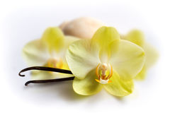 Vanilla sticks with flower and ice-cream Royalty Free Stock Photography