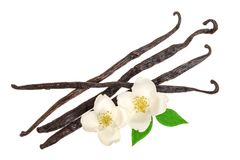 Vanilla sticks with flower and leaf isolated on white background. Top view. Flat lay Royalty Free Stock Photos